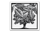 Walnut Tree Loose Footer Logo